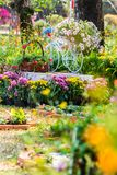 In home cozy garden on summer. Royalty Free Stock Photo
