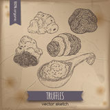 Vintage white, black truffles and sauce sketch on old paper. Stock Image