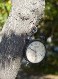 Vintage white clock hanging on the tree Royalty Free Stock Photo
