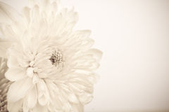 Vintage White Flower. Stock Images