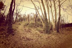 Vintage wide forest Stock Photography