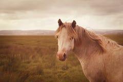 Vintage wild horse Royalty Free Stock Image