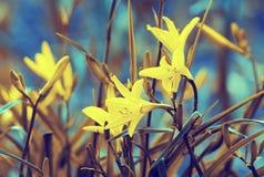 Vintage wild lily flowers Stock Photo