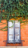 Vintage window with ivy Royalty Free Stock Photo