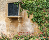 Vintage window on Old Stone Wall with ivy Stock Images