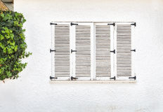 Vintage window, Old wooden window and green ivy on white wall Stock Photography