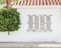 Vintage window, Old wooden window and green ivy on white wall Royalty Free Stock Photo