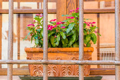 Vintage window with railings and Impatiens Sultanii Stock Photography