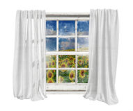 Vintage window with white curtains isolated seeing sunflowers field. Old white vintage window with white curtains isolated on white background seeing sunflowers Stock Photo