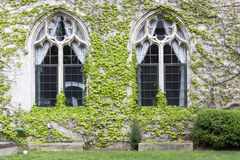 Vintage Windows Fotografia de Stock Royalty Free