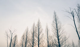 Vintage Winter treetops and sunset Royalty Free Stock Photo