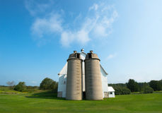 Vintage Wisconsin Dairy Farm Barn. A vintage Wisconsin dairy farm barn that is painted white. Two cement silos are visible in front of the old miking parlor royalty free stock photos