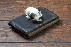 Vintage witchcraft still life. Cat skull on old book on old wooden desk. Vintage witchcraft still life royalty free stock photo