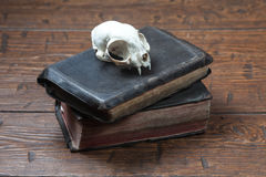 Vintage witchcraft still life. Cat skull on old book on old wooden desk. Vintage witchcraft still life Royalty Free Stock Photos
