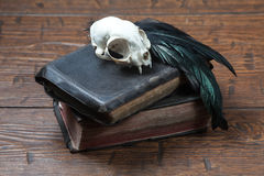 Vintage witchcraft still life. Cat skull, old books and crow quill on old wooden desk. Vintage witchcraft still life Stock Photo