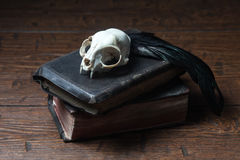 Vintage witchcraft still life. Cat skull, old books and crow quill on old wooden desk. Vintage witchcraft still life stock photography