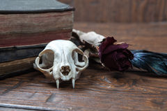Vintage witchcraft still life. Cat skull, old books, dry rose and crow quill on old wooden desk. Vintage witchcraft still life stock photo