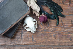 Vintage witchcraft still life. Cat skull, old books, dry rose and crow quill on old wooden desk. Vintage witchcraft still life. Top view Stock Photography
