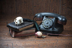 Vintage witchcraft still life. Cat skull, old books, dry rose, old telephone and crow quill on old wooden desk. Vintage witchcraft still life royalty free stock image