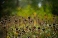 Vintage withered flowers in the autumn field royalty free stock photos