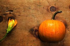 Vintage wood table with pumpkin and blossom Royalty Free Stock Photo