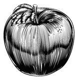 Vintage Woodcut Apple Royalty Free Stock Images