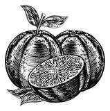 Vintage Woodcut Sliced Oranges. An original illustration of sliced oranges fruit in a vintage woodcut or woodblock style Stock Photo