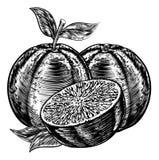 Vintage Woodcut Sliced Oranges. An original illustration of sliced oranges fruit in a vintage woodcut or woodblock style stock illustration
