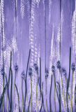 Vintage wooden abstract purple background with flowers Stock Photo