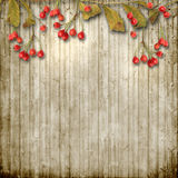 Vintage wooden background with autumn ashberry Royalty Free Stock Photo