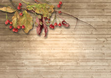 Vintage wooden background with autumn leaves and red berries. Royalty Free Stock Photos