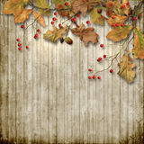 Vintage wooden background with autumn leaves and rowan Stock Images