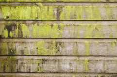 Vintage wooden background with moss Stock Photos