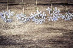 Vintage wooden background with spring flowers Stock Photo