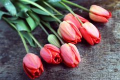 Vintage wooden background with tulips. In drops of dew Stock Photo