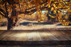 Vintage wooden board table in front of dreamy and abstract forest landscape with lens flare. Stock Photography