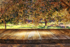 Vintage wooden board table in front of dreamy and abstract forest landscape with lens flare Royalty Free Stock Photography