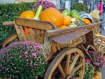 Vintage wooden cart loaded with different pumpkins royalty free stock images