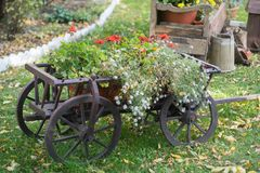 Vintage wooden cart with summer flowers stock photos