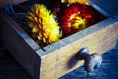 Vintage wooden coffee mill grinder with yellow flowers in open drawer Royalty Free Stock Image