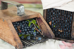 Vintage wooden combs used for collecting blueberries Stock Photo