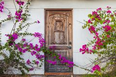 Vintage wooden door framed by climbing flowers/bougainvillea trellis plant growing on the facade of a house stock photos