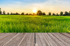Vintage wooden texture with rice field in the morning Stock Photo