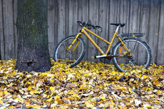 Vintage yellow bike in autumn Stock Photography