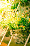 Vintage yellow flowers in basket. Stock Images
