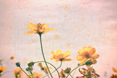 Vintage yellow Flowers on old paper.  Royalty Free Stock Image