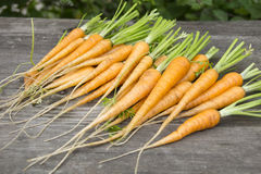 Vintage young carrots Royalty Free Stock Photos