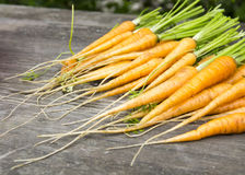 Vintage young carrots Royalty Free Stock Photo