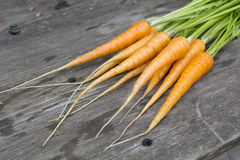 Vintage young carrots Royalty Free Stock Image