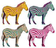Vintage Zebra collection -  retro color vector set Royalty Free Stock Image